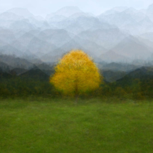 Baum-Ramsau-Lonicer